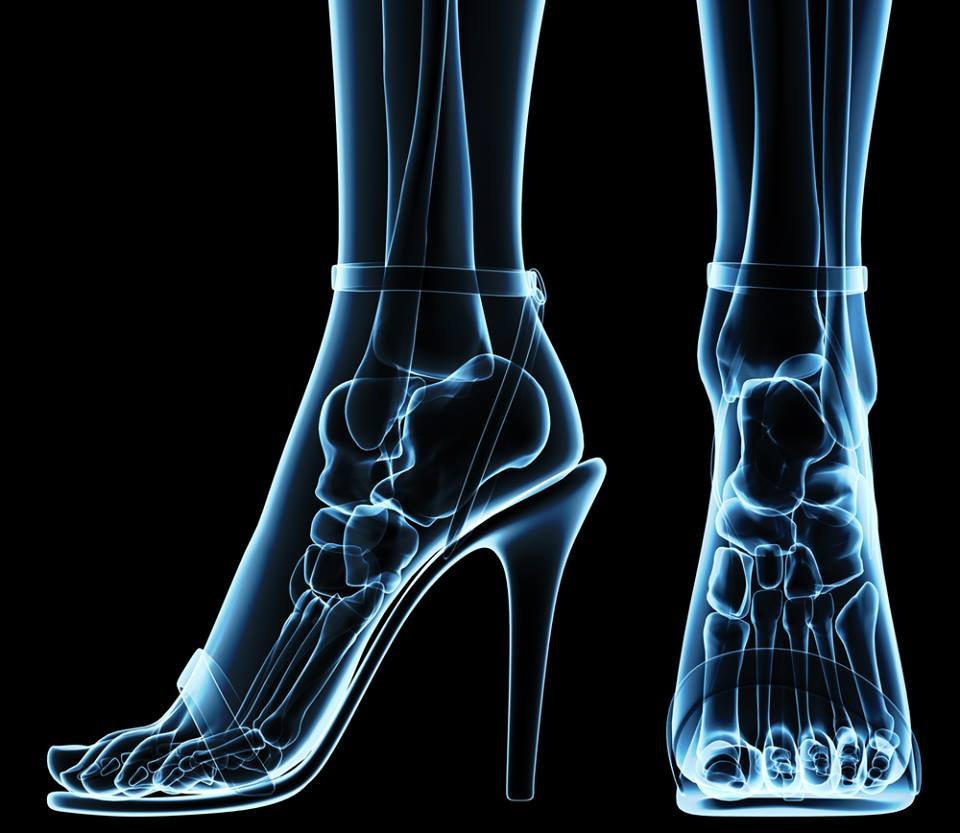 25: The percentage of the body\'s bones that are in the feet – So ...